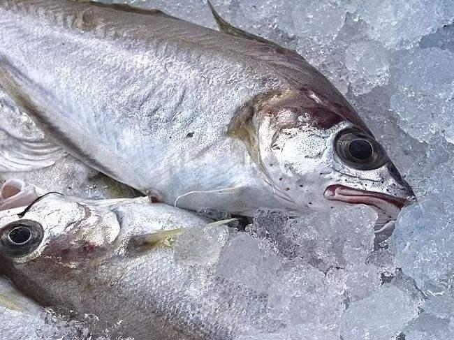 壳聚糖对冷藏鲤鱼片品质的影响研究