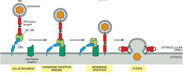 药明生物细胞培养批次产量获得重大突破