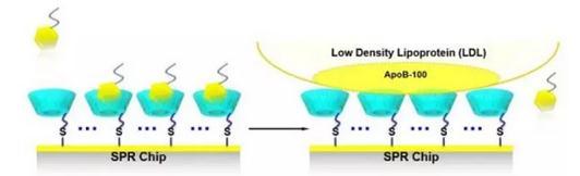 一种基于环糊精的LDL选择性吸附表面