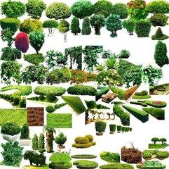 4分钟解密中国植物如何改变世界
