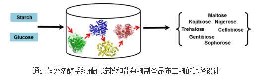 淀粉和葡萄糖一步转化为昆布二糖的体外多酶催化系统