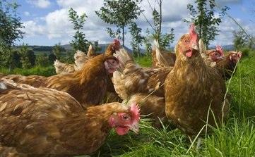 嘉吉收购Konspol食品和新鲜鸡肉业务 扩大了家禽业务重点
