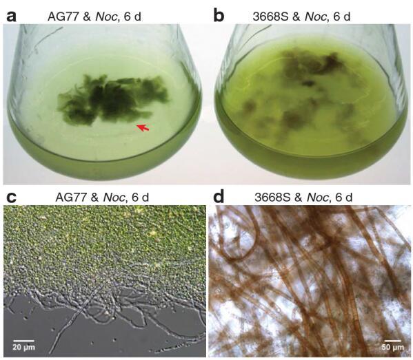 密歇根州立大学利用藻类和真菌创造新的生物燃料系统