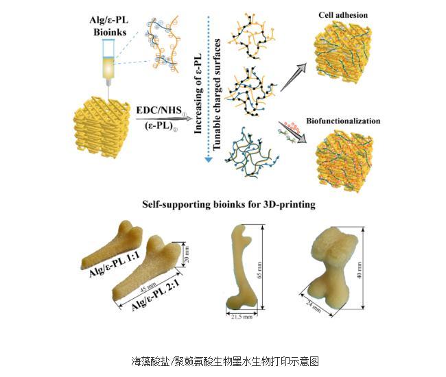 基于海藻酸盐/聚赖氨酸基新型聚电解质生物墨水