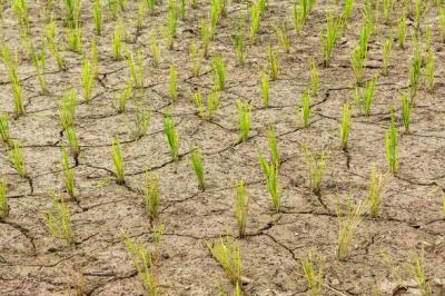 土壤板结的原因,土壤板结如何改良?