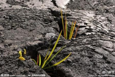 福建省2018年土壤污染防治专项资金预算通知发布 重点治理土壤环境