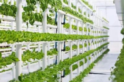 污水种植蔬菜项目获得美国农业部巨额资助