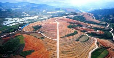 超积累植物能够修复土壤重金属污染
