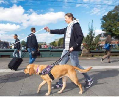 碳纤维或可用于导盲犬牵引带 可显著提高狗和主人的舒适度