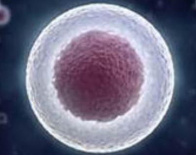 全球首例!日本批准诱导多能干细胞治疗脊髓损伤人体临床计划!
