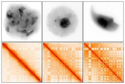 DNA的3D重构对繁殖后代有重大意义