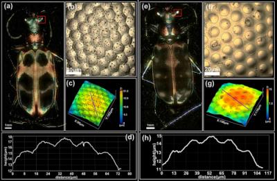 西安光机所姚保利团队在光学成像研究取得多项进展