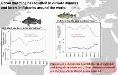 """研究表面气候变暖让全球渔业萎缩 少数""""鱼生赢家""""或是希望"""