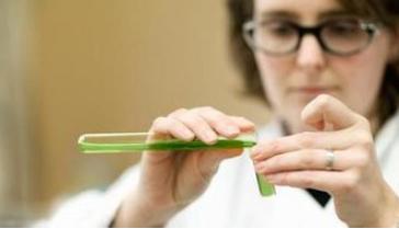 英威达推出新型尼龙纤维 可以使地毯长时间保持清洁