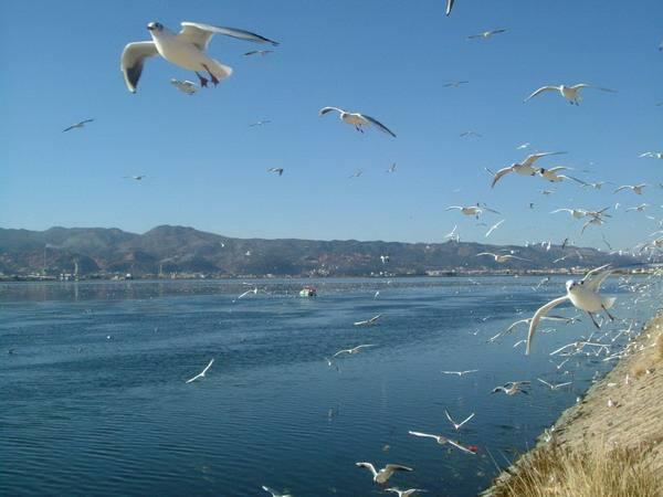 环境部建立跨省流域突发水污染事件联防联控机制 丹江口水库9条支流水质均优良