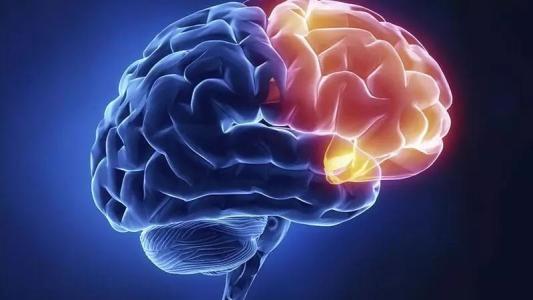 PNAS:新型炎症抑制剂可以防止胎儿出现神经发育障碍