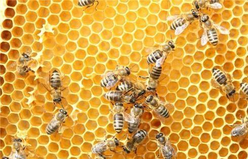 新研究发现蜂巢可充当一种敏感且经济的空气污染预警系统