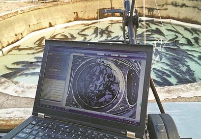AI图像识别技术助力渔业:5秒数清一池鱼的数量 准确率99%
