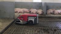 荷兰Lely公司发明自动清理猪粪的机器人 智能屎壳郎大放异彩