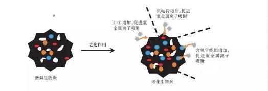 老化作用对生物炭特性、吸附重金属的影响