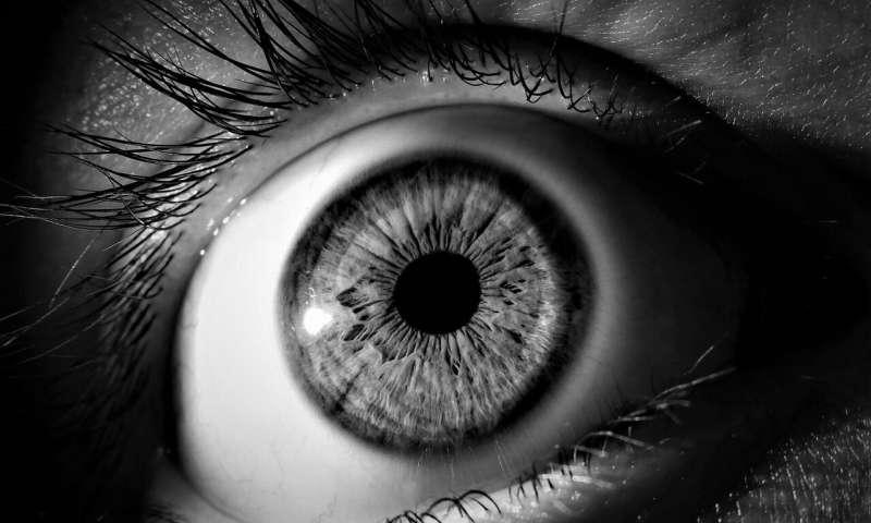 英美科学家揭示大自然可以为糖尿病导致的眼睛失明提供答案