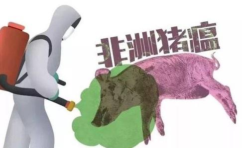 非洲猪瘟ASF疫情全球肆虐,柬埔寨也发现