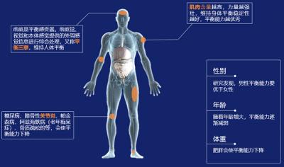 装有4个重量传感器的平衡秤  随时观察身体平衡指数