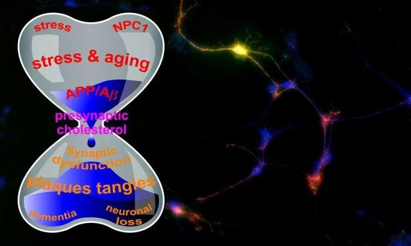 科学家们提出了与阿尔茨海默病相关的淀粉样前体蛋白的新理论