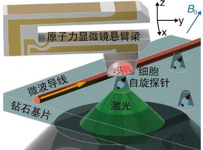 细胞原位纳米磁共振成像实验平台 高清拍摄癌细胞