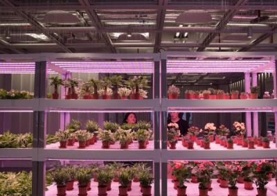 """不需阳光和土壤 """"植物工厂""""的人工补光技术有多神奇?"""