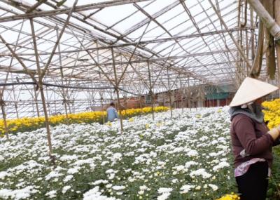 巴斯夫光稳定剂应用于温室棚膜 助力农民提高作物产量减少废物