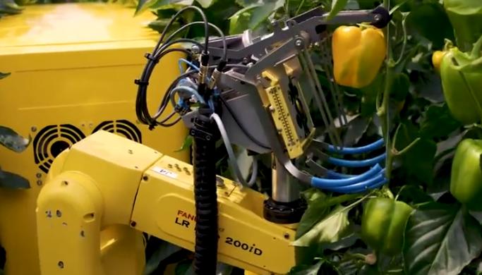 农业机器人, 摘个辣椒拍一百张照, 全天干满24小时!