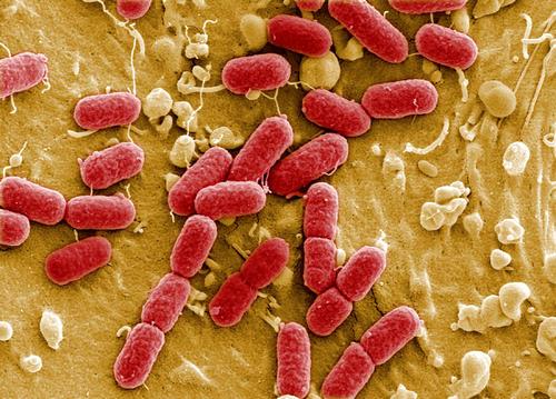 剑桥大学研究团队构建了仅含61种密码子的大肠杆菌的全基因组合