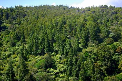 森林资源如何帮助应对气候变化和空气污染?