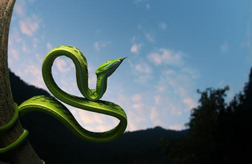 Wellcome宣布将耗资1亿美元用于研发抗蛇毒药物