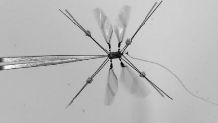 南加州大学研究出Bee+机器人 类似蚊子稳定性高