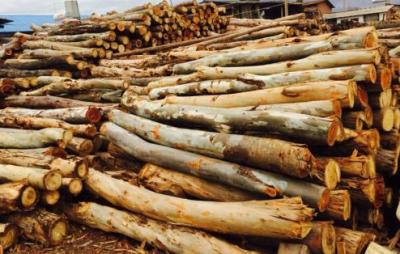 马来西亚进口木材正式入库泸州保税中心