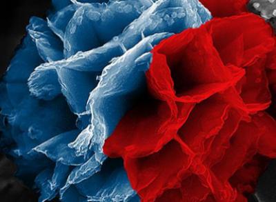 Nature:南京大学成功制备单层氧化物钙钛矿二维晶体膜