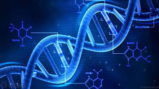 CCR5编码的LncRNA会促进艾滋病病毒的感染能力