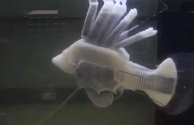 新成果!美国康奈尔大学在机器人体内制成人工合成血管系统