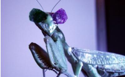 英国纽卡斯尔大学的科学家发现用于3D视觉的神经元