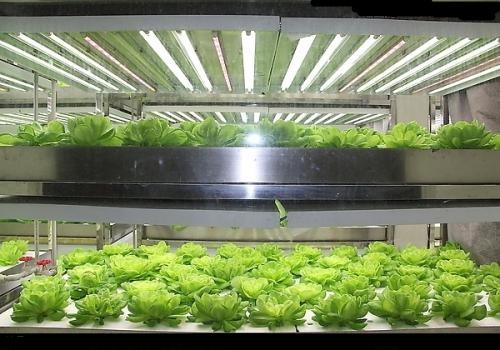 LED植物工厂!中国的现代智慧农业更上一层楼