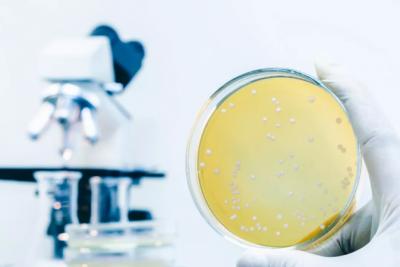 环保真菌靛蓝新工艺 助力牛仔布绿色健康