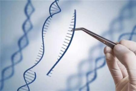 北大魏文胜组报道新型RNA单碱基基因编辑技术LEAPER