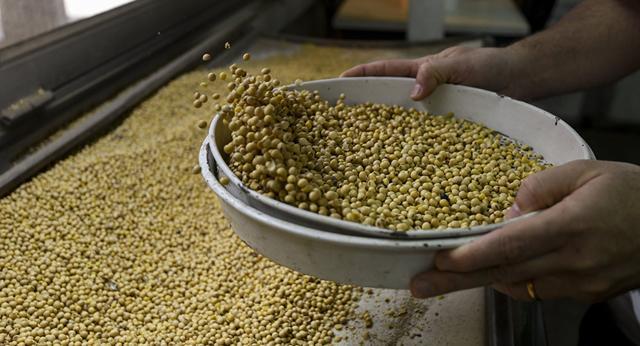 中国中粮集团拟在俄罗斯新西伯利亚州建立对华谷物出口中心