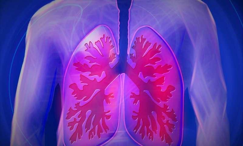美国科学家发现高水平的MMP可能导致肺纤维化