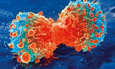 北京大学等首次将肿瘤靶向识别与免疫检查点抑制相结合