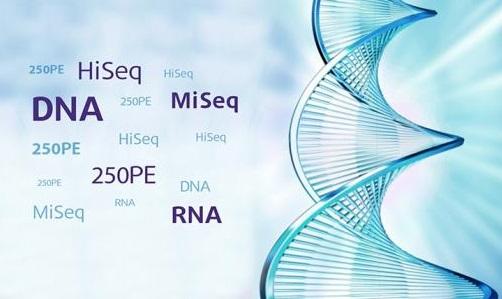 加州大学开发新技术同时测定单细胞中DNA甲基化和染色质结构
