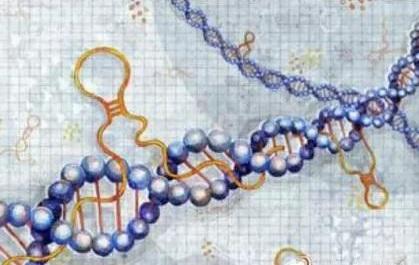 中科院揭示早期胚胎发育母源mRNA稳定性的机制