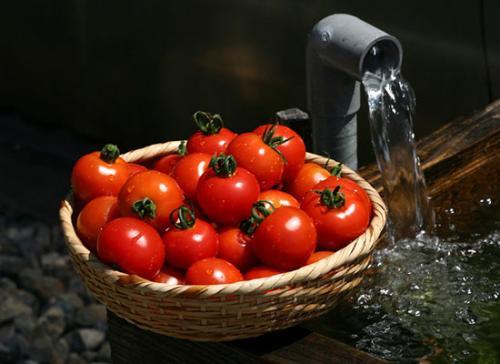 CRISPR基因编辑让番茄产生辣椒素,只需调整6个基因的表达